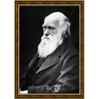 Дарвин Чарльз (1)