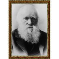 Дарвин Чарльз (3)